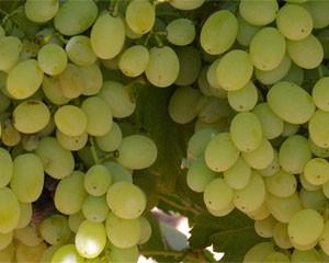 Grapes Sultana